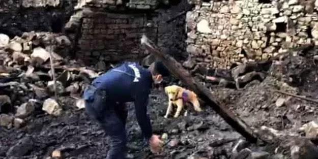 Köpeğin işaret ettiği yeri kazınca korkunç manzarayla karşılaştı