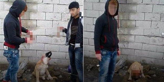 Köpeğin kulağını kesenlere bakın ne ceza verildi