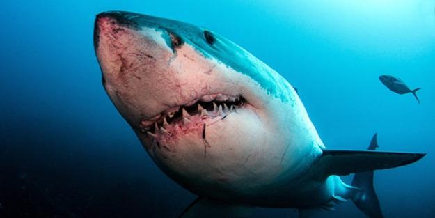 Köpek balığı, dalış yapan kadınlara saldırdı