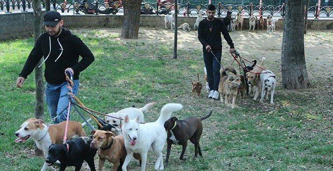 Köpek gezdiricileri günde birkaç saat çalışarak ayda 6 bin lira kazanıyor