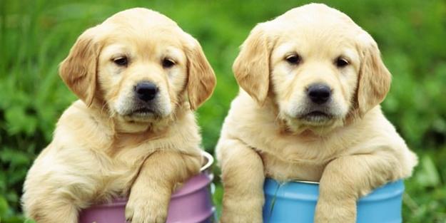 Köpekler yaşlanır mı? - FOTO