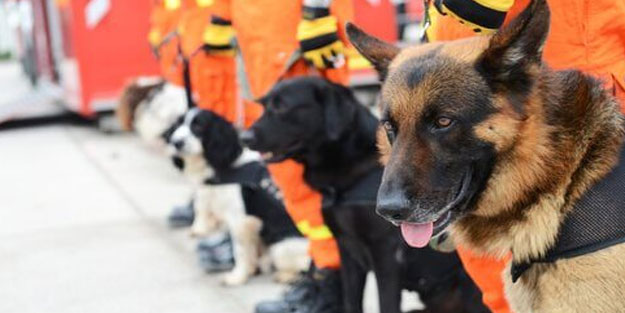 Koronavirüsü tespit etmek için köpekleri kullanacaklar