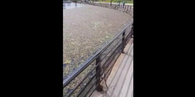 Küçükçekmece gölü ölüyor! CHP'li belediyeler uyuyor