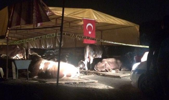 Kurban pazarında silahlı kavga: 3 kişi öldü