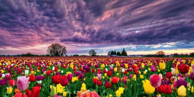 Küresel ısınmanın çiçekleri de etkilediği ortaya çıktı