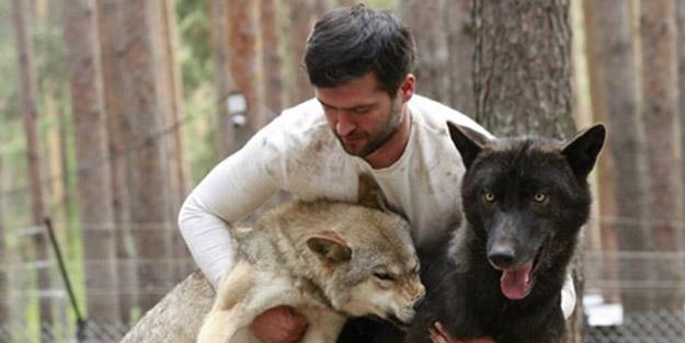 Kurt sürüsüyle yaşayan Kirill Potapov vahşi hayvanlara rehabilitasyon merkezi kurmak istiyor
