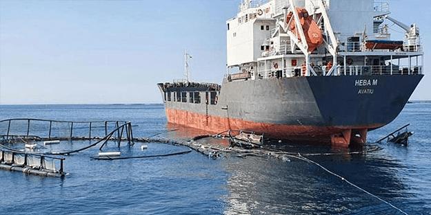 Çiftlikteki balıkların şansı: Kuru yük gemisi balık çiftliğine çarptı!