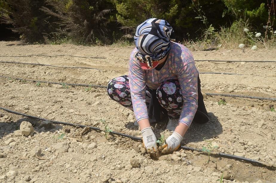 Kuşadası'nda 6 bin 500 yerli fide toprakla buluştu