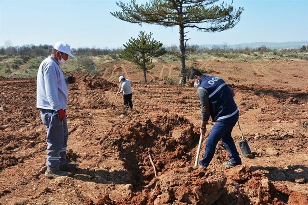Kütahya Orman Bölge Müdürlüğü gelir getirici meyve dikimine başladı