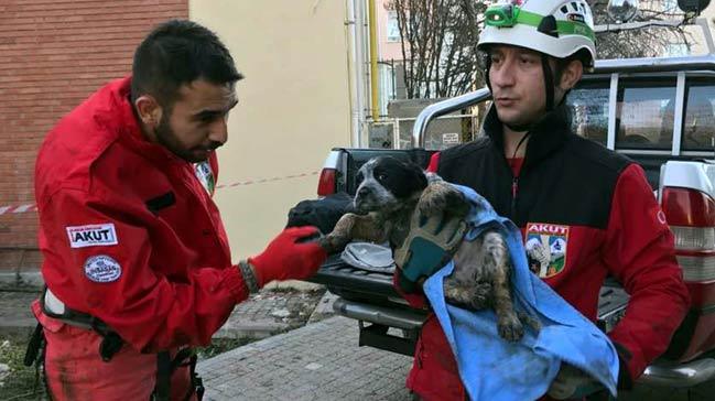 Kuyuya düşen bir yavru köpek daha kurtarıldı