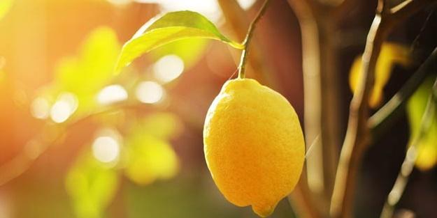 Limon hangi hastalıklara iyi geliyor