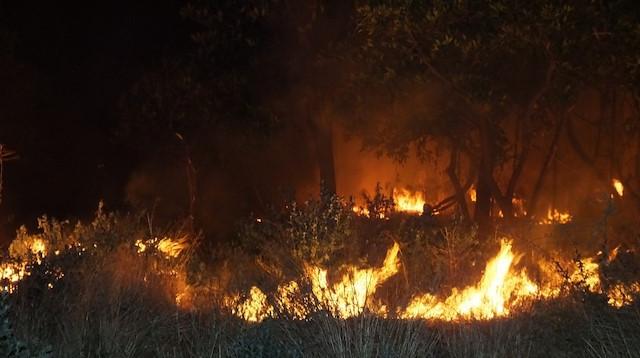 Mandalina bahçesi alev alev yandı