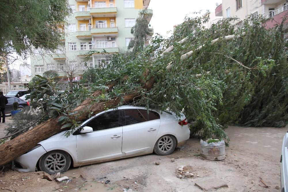 Mardin'de şiddetli rüzgar dev ağacı otomobilin üzerine devirdi