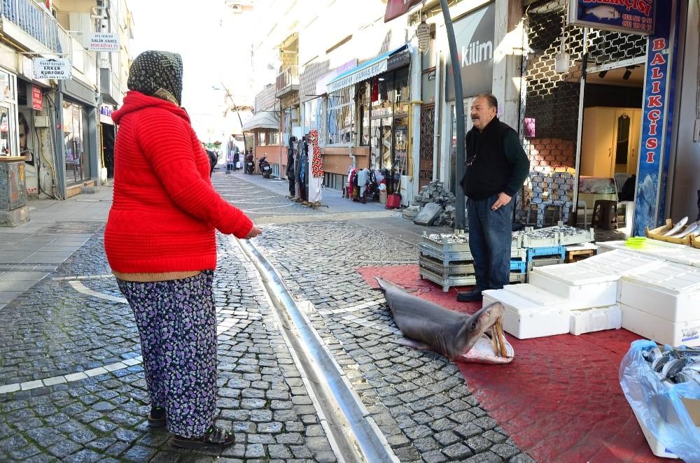Marmara'da yakalandı: 3 metrelik dev
