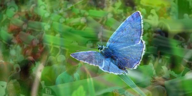 Mavi kelebekler şehri