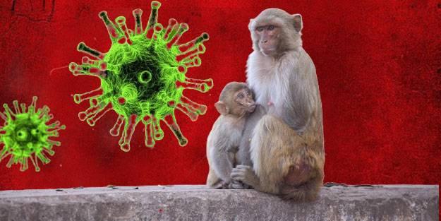 Maymun çiçeği virüsü nedir? Maymun çiçeği virüsü bulaşıcı mı? Maymun çiçeği virüsü belirtileri neler?
