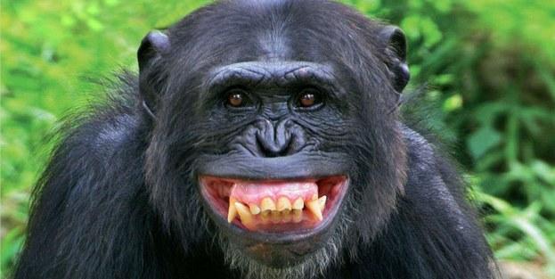 Maymuncu medyanın 'mutlu günü'