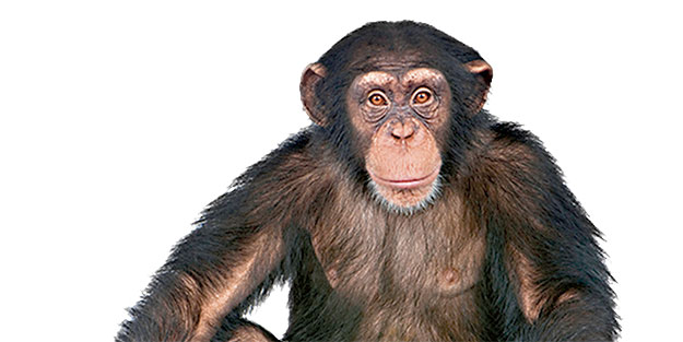 Medya maymunları!