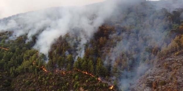 Mersin'de korkutan yangın! Bakan Pakdemirli'den yeni açıklama