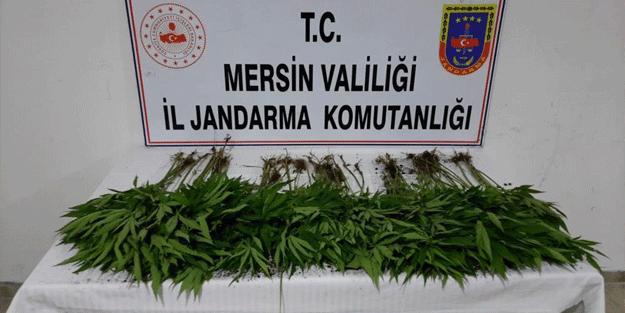 Mersin'de uyuşturucu operasyonu: Gözaltılar var