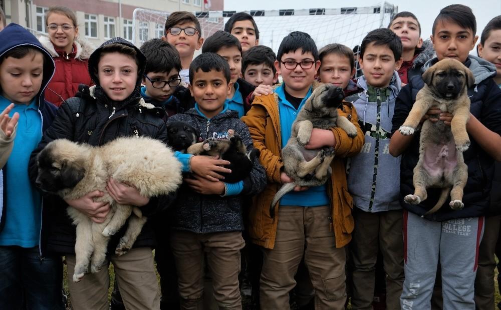 Minik öğrencilerin sahiplendikleri köpeklere kavuşma anı yürekleri ısıttı