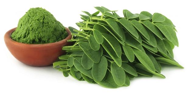 Moringa çayı ile ilgili görsel sonucu