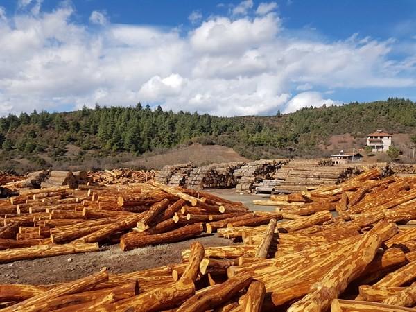"""Müdür Keskin: """"Orman emvallerimizi en iyi şekilde muhafaza ediyoruz"""""""