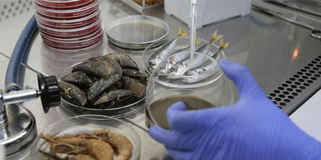 Müsilaj balıkları etkiledi mi, tüketmeli miyiz? İşte cevabı