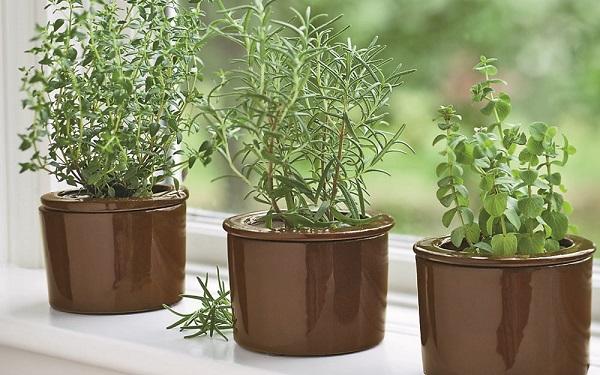 Mutfağınızda yetiştirebileceğiniz 5 bitki