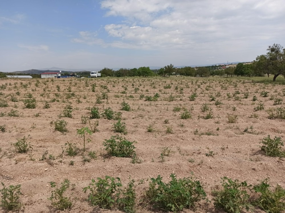 Nevşehir'de 90 bin dekar tarım arazisi zarar gördü
