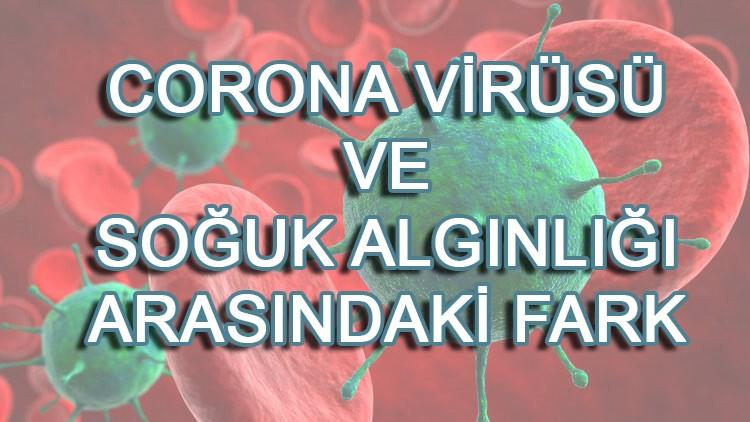 Nezle ve corona virüs arasındaki fark nedir?