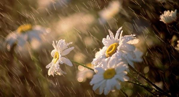 Nisan yağmurları hangi hastalığa iyi gelir?