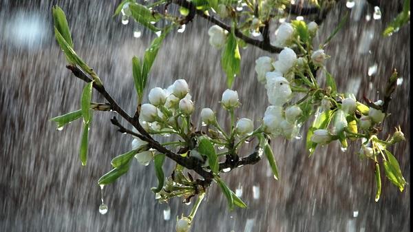 Nisan yağmurları neye iyi gelir? | Nisan yağmuru faydası