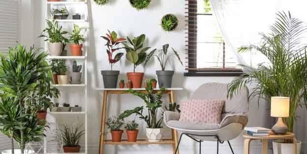 Odanızın havasını temizleyen bitkiler