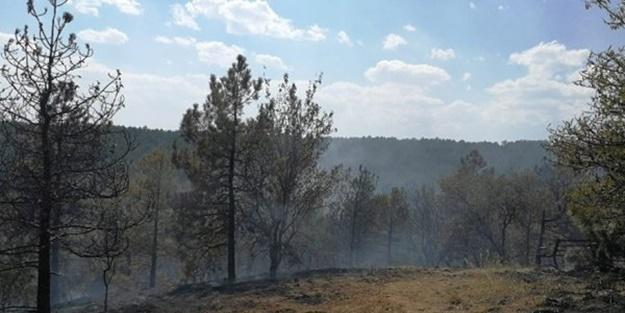 ODTÜ Ormanı'nda yangın çıktı!