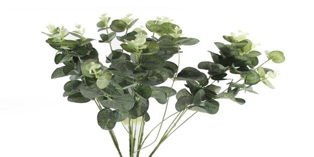 Okaliptus yağının faydaları nelerdir?