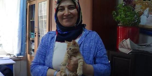 Okulda yaralı bulunup, öğretmenin sahiplendiği sevimli kedi ilgi odağı oldu