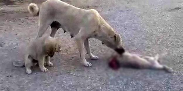 Ölen yavrusunun başında ağladı