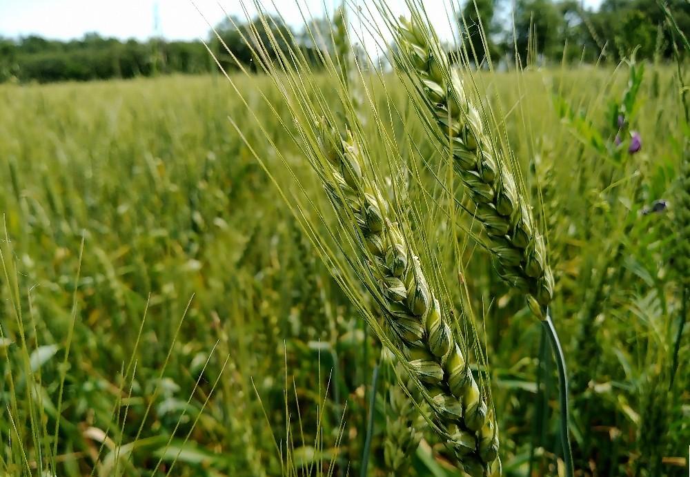 OMÜ'lü profesörden tarımda 'inovasyon' çağrısı