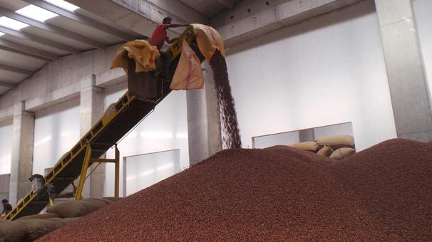 Ordu'da üreticiden 12 liraya alınan fındık işlenip, 60 liraya satılıyor