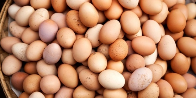 Organik yumurta nasıl yetiştirilmelidir?