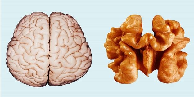Organlarımıza benzeyen besinler nelerdir? Hangi organ hangi besine benziyor! Organlarıma benzeyen besinlerin faydaları!