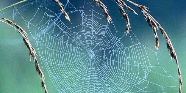 Örümcek neden ulaşılması zor yerlere ağ yapar? Örümcekten kurtulma yolları nelerdir?
