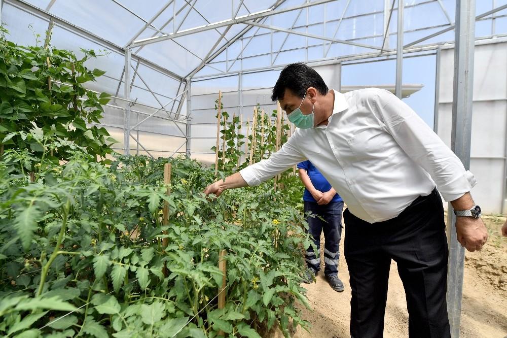 Osmangazi'den millî tarım hamlesi