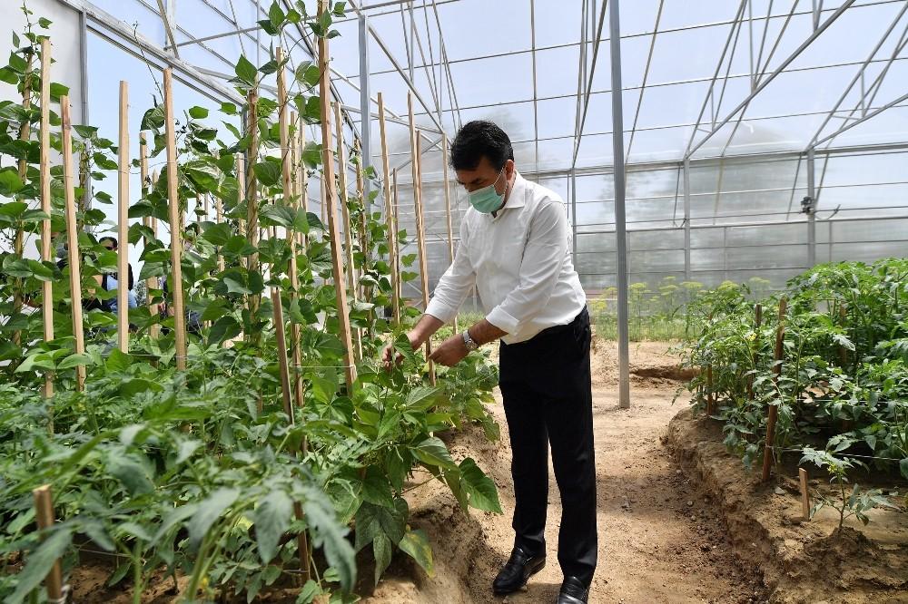 Osmangazi'den milli tarım hamlesi