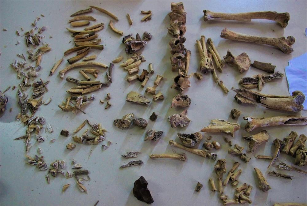 (Özel) İnsanlığın 4 bin 500 sene önce köpek etini pişirerek tükettiği ortaya çıktı