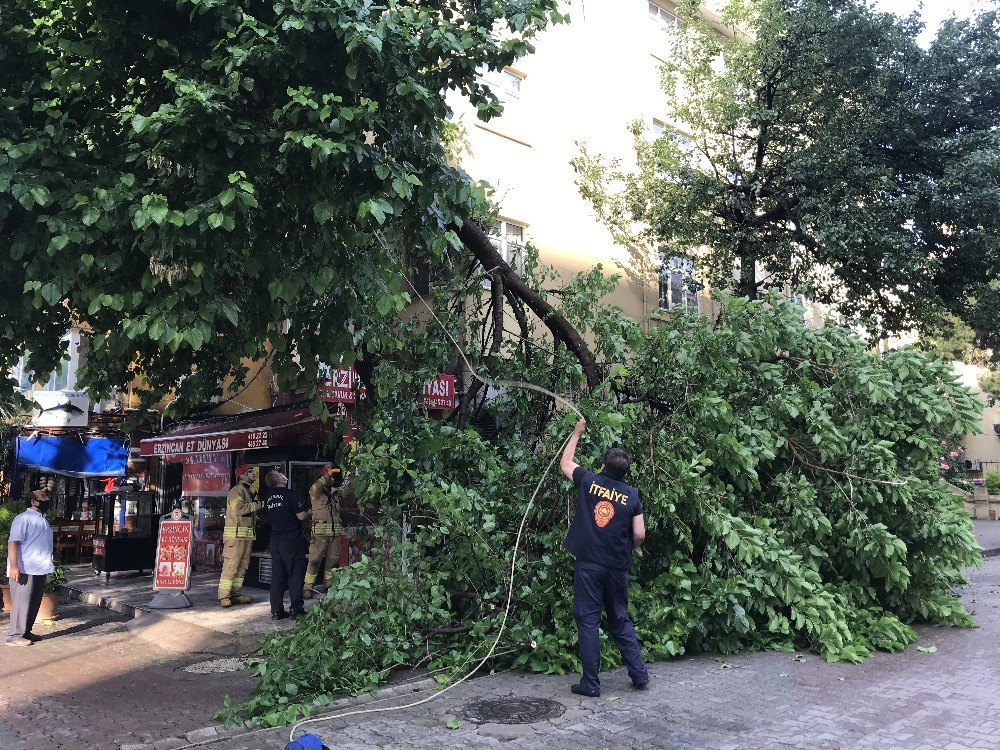 (ÖZEL) Kadıköy'de yağan aşırı yağmur yarım asırlık dut ağacını devirdi