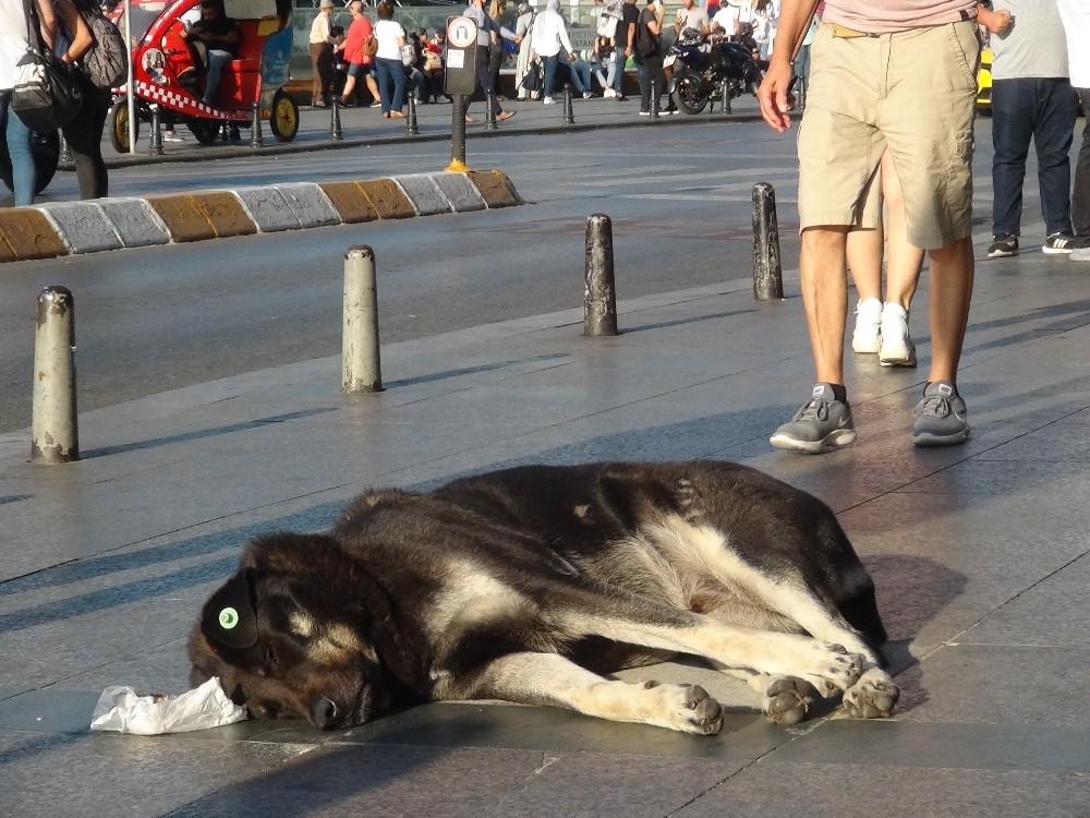 (Özel) Taksim'de turist kadın sevdiği köpek tarafından ısırıldı