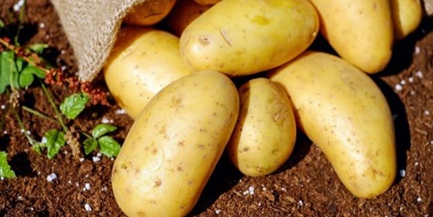 Patatesi buzdolabında saklayanlar aman dikkat! Bakın ne oluyor