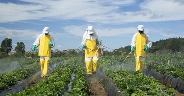 Pestisit nedir? Pestisit nerelerde kullanılır?
